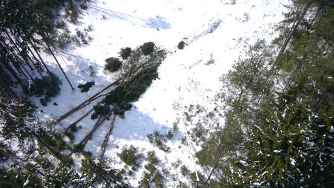 AERIAL: fallen spruces in the forest Footage