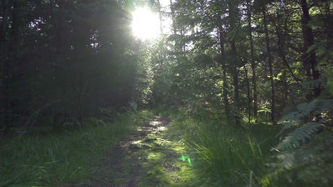Moving Along The Forest Path stock footage