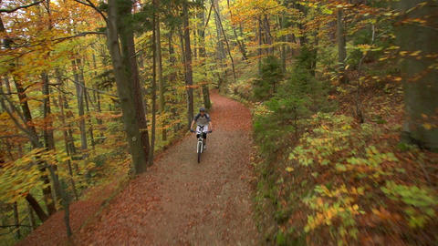 AERIAL: Cross Country Biker In Autumn Forest stock footage