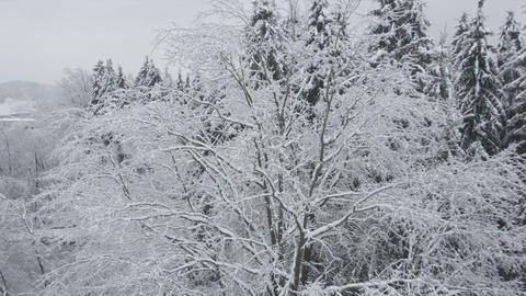 AERIAL: Snowy trees Footage