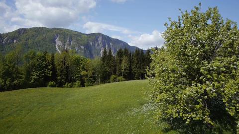 AERIAL: Blooming nature in spring Footage