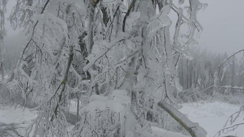 AERIAL: Nature covered in ice Footage