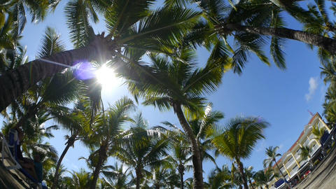 Palms at tropical resort Stock Video Footage