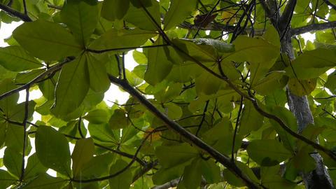 Raindrops falling on tree leaves Footage