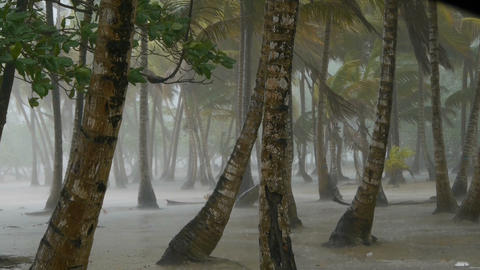 Tropical Thunderstorm stock footage