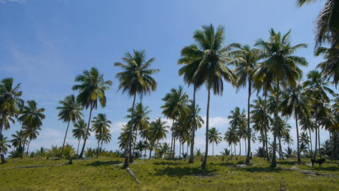 Caribbean island Live Action