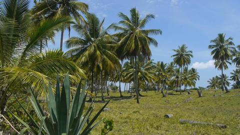 Palms on a tropical island Footage