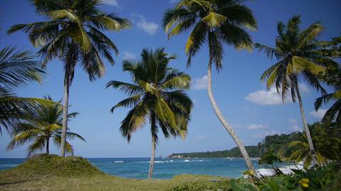 Palms on a tropical beach Footage