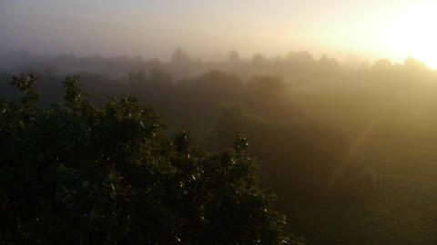 Flight over a tree in misty morning Footage