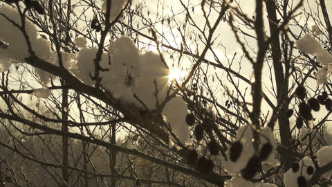 Sun shines through snowy branches Footage