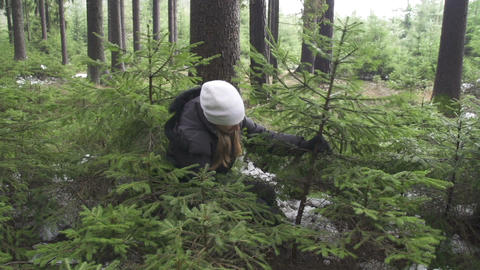 Young woman cutting a spruce tree Footage