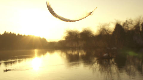 SLOW MOTION: Falling Feather stock footage