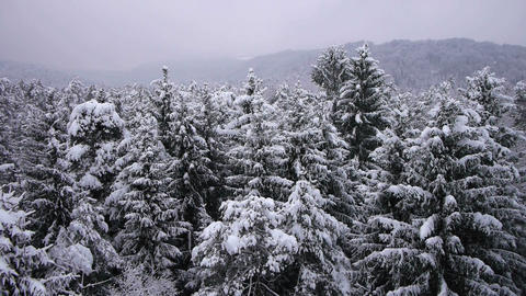 AERIAL: Flight over a snowy forest Live Action