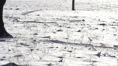 SLOW MOTION: horse walking on snowy field Footage