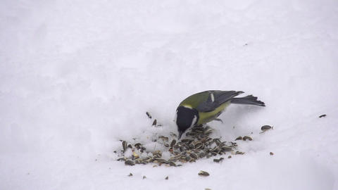 SLOW MOTION: Feeding wild birds in winter Footage
