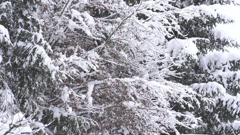 SLOW MOTION: Snowing in nature Footage