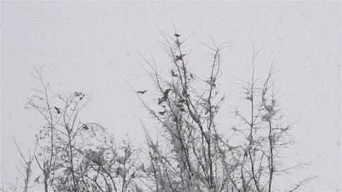SLOW MOTION: Birds flying away in winter Footage