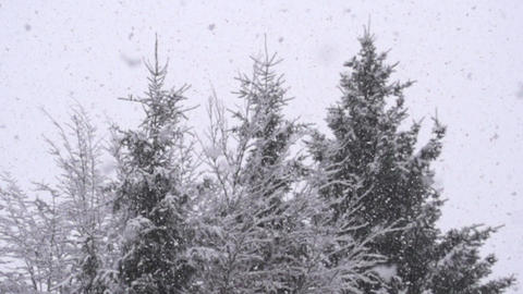 SLOW MOTION: Snowing in woods Footage