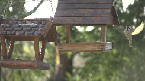 SLOW MOTION: Bird flies to empty bird house Footage
