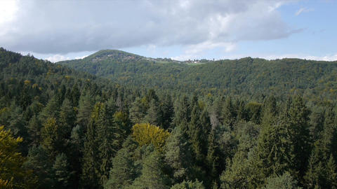 Aerial view of forest in the summer Live Action