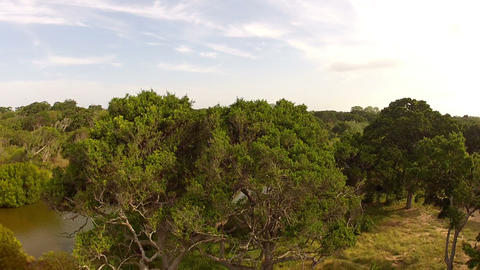 AERIAL: Flight over the trees and the river Footage