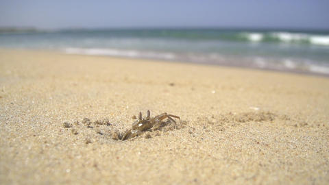 SLOW MOTION: Little crab on a beach close up Footage