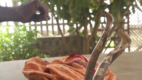 SLOW MOTION: Snake charmer with cobra Footage