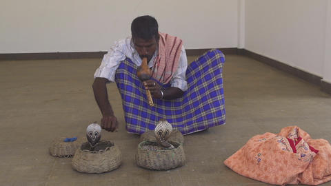SLoW MOTION: Indian man charming two cobras Live Action