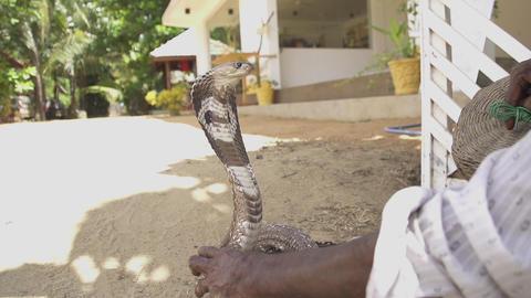 SLOW MOTION: Cobra charming in Sri Lanka Live Action