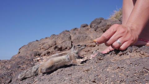 SLOW MOTION: Female feeding the chipmunks Footage