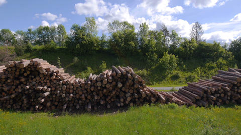 AERIAL: Large pile of timber logs in sunny spring Live Action