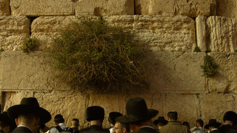 4K UHD Jews pray at the Western Wall during passov Live Action