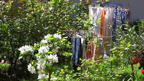 Laundry hangs in fresh air in the garden Full HD Footage