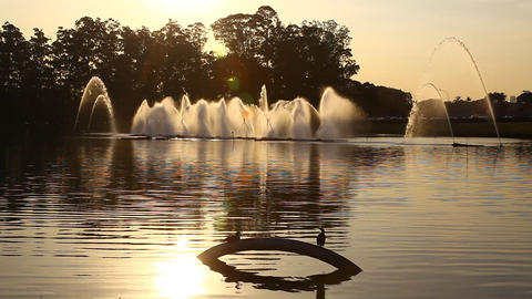 Fountains and birds during sunset FULL HD Footage