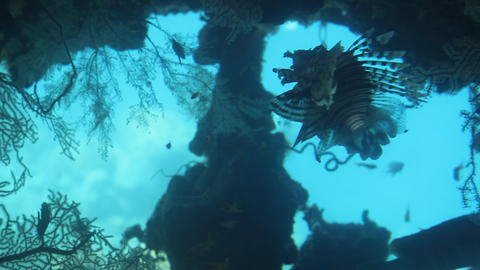 Fish And Corals In The Underwater Observatory Mari stock footage