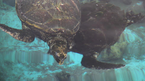 Turtle in the Underwater Observatory Marine Park,  Footage