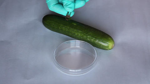 Scientist Takes A Microbiological Sample Cucumber  stock footage