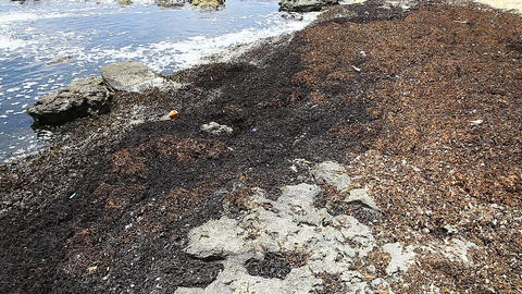 Dead algae washed to shore with pollution Footage