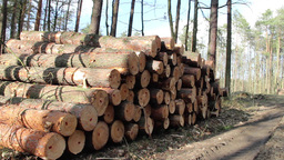 Forest felling, pile of logs - logging site Footage