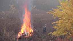 Man is burning branches in a foggy autumn day Stock Video Footage