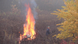 Man is burning branches in a foggy autumn day Footage