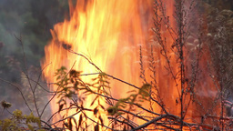 Danger of forest fire - fire near the forest Footage
