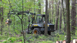 Deforestation. Harvester working in the forest Footage