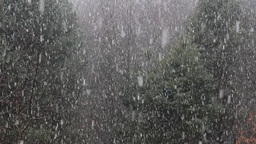 First snow falling in the forest 2 Footage