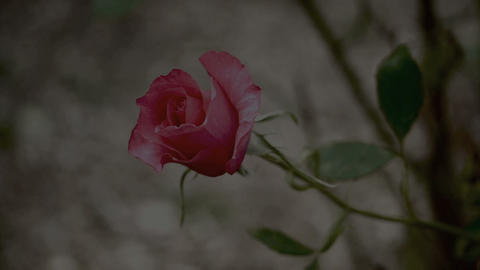 Flower garden Stock Video Footage