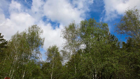 Sky. Forest Stock Video Footage