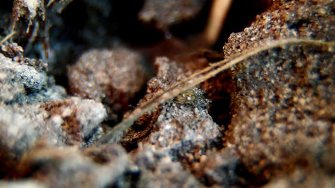 Ants 2 HD Stock Video Footage