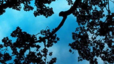 Sky and Slow Clouds Loop Stock Video Footage