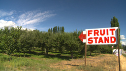 HD2008-8-2-15 fruit stand Okan Stock Video Footage