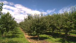 HD2008-8-2-17 fruit stand apple orchard Stock Video Footage